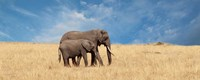 Elephant and her Calf Fine-Art Print