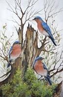 A Bluebird Morning Fine-Art Print