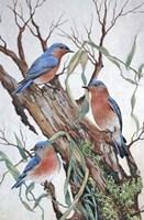 Bluebirds at Rest Fine-Art Print