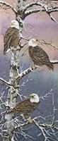 Eagle Trio at Dawn Fine-Art Print