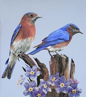 Eastern Bluebird Duo Fine-Art Print