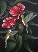 Hummingbird  Duet Fine-Art Print