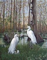Snowy White Egret Nesting Fine-Art Print