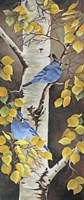 Stellar Jay with Leaves of Gold Fine-Art Print