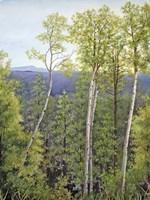 Forest Road Aspen Fine-Art Print