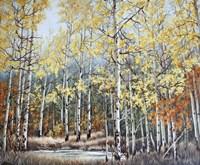 New Aspen Grove Fine-Art Print