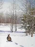 Winter Rabbit Fine-Art Print