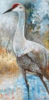 Sandhill Cranes I Fine-Art Print