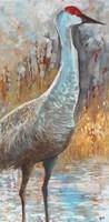 Sandhill Cranes III Fine-Art Print