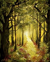 Sunlit Forest Path Fine-Art Print