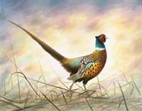 Spring Rooster Fine-Art Print