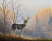 Autumn Air Fine-Art Print