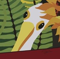 Peeping Pelican Fine-Art Print