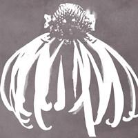 Cone Flower Fine-Art Print