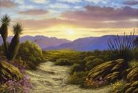 Desert Splendour Fine-Art Print