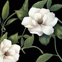 Sweet Magnolias I Fine-Art Print