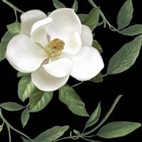 Sweet Magnolias II Fine-Art Print