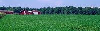 Green Field with Barn, Maryland Fine-Art Print