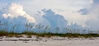 Reed Grass on Beach, Great Exuma Island, Bahamas Fine-Art Print