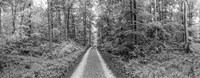 Dirt Road Passing through a Forest, Baden-Wurttemberg, Germany Fine-Art Print