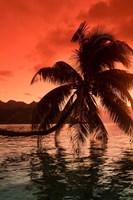 Palm Trees at Sunset, Moorea, Tahiti, French Polynesia Fine-Art Print