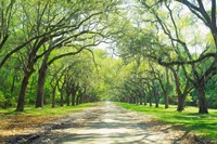 Live Oaks and Spanish Moss Wormsloe State Historic Site Savannah GA Fine-Art Print