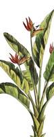 Tropical Palm Paradise I Fine-Art Print