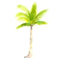 Tropical Icons Palm Tree Fine-Art Print