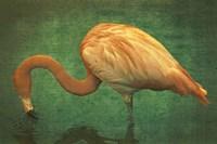 Caribbean Flamingo Fine-Art Print