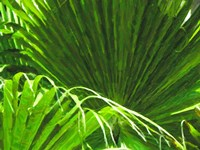Painted Ferns II Fine-Art Print