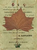 Leaf Study II Fine-Art Print