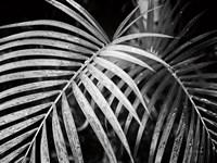 Palm Fronds Fine-Art Print