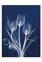 Ecto Indigo Tulips Fine-Art Print