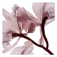 Silver Luster 2 Fine-Art Print