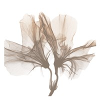 Dry Azalea 1 Fine-Art Print