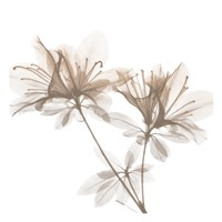 Dry Azalea 2 Fine-Art Print