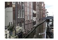 Swan Amsterdam Fine-Art Print
