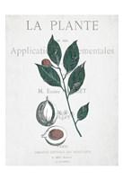 Botanical 3 Fine-Art Print