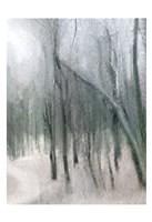 Shrouded Forest 3 Fine-Art Print