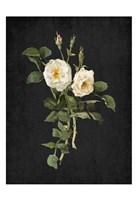 Roses on Black 1 Fine-Art Print