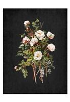 Roses on Black 2 Fine-Art Print