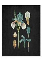 Blue Iris 2 Fine-Art Print