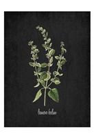 Lemon Balm Fine-Art Print