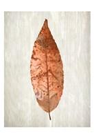 Copper Leaves 1 Fine-Art Print