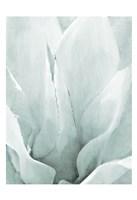Agave 2 Fine-Art Print