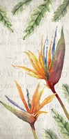 Tropical Blooms 2 Fine-Art Print