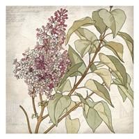 Shades of Purple 1 Fine-Art Print
