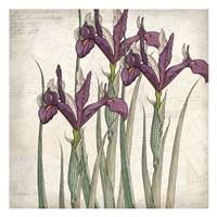 Shades of Purple 3 Fine-Art Print