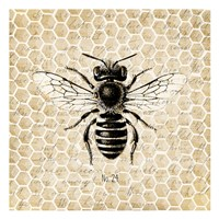 Honeycomb No 24 Fine-Art Print