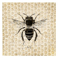 Honeycomb No 32 Fine-Art Print